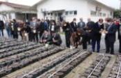 33 bin incir çeliği fidan olmak için toprakla buluştu