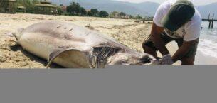 Köpek balığı sahilde ölü bulundu