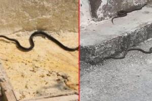 Kara yılan paniği! Farklı noktalardan peş peşe ortaya çıktılar