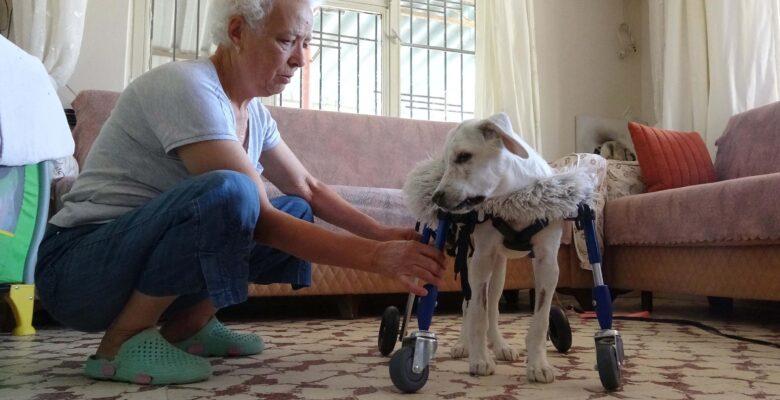 Adını 'Yaşar' koyduğu engelli köpeğe çocuğu gibi bakıyor