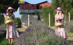 Lavanta Festivali renkli görüntülere sahne oldu