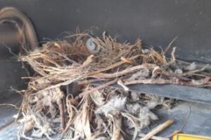 Kuşun yuva yaptığı iş makinesi 1,5 ay çalıştırılmayacak