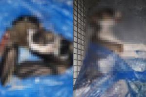 Yavru köpeklerin derisini yüzerek öldürdüler