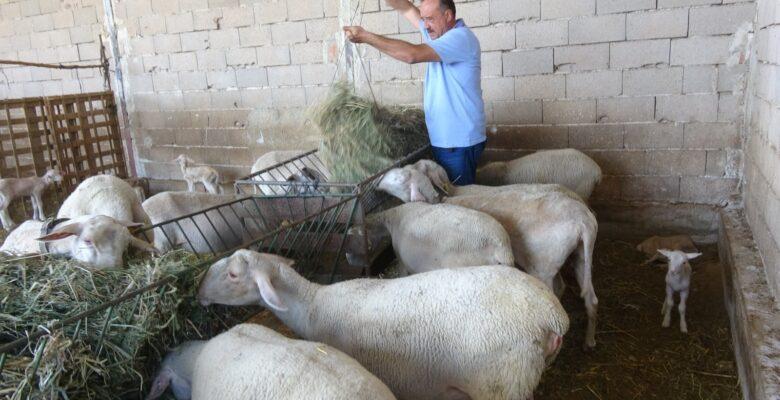 Sarıoğlu; Köylüyü köyde tutmanın yolu küçükbaş hayvan ve arıcılıktan geçer