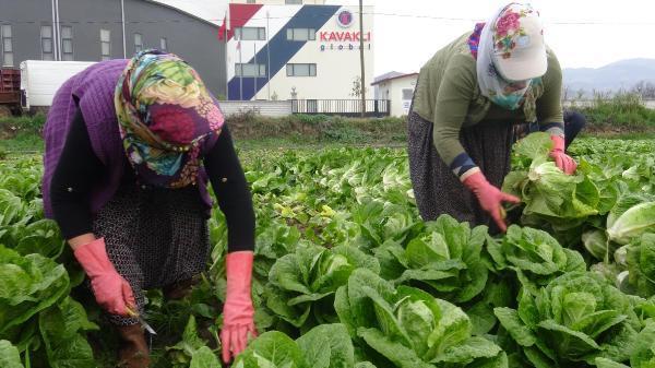 Kısıtlamadan muaf çiftçiler üretime devam etti