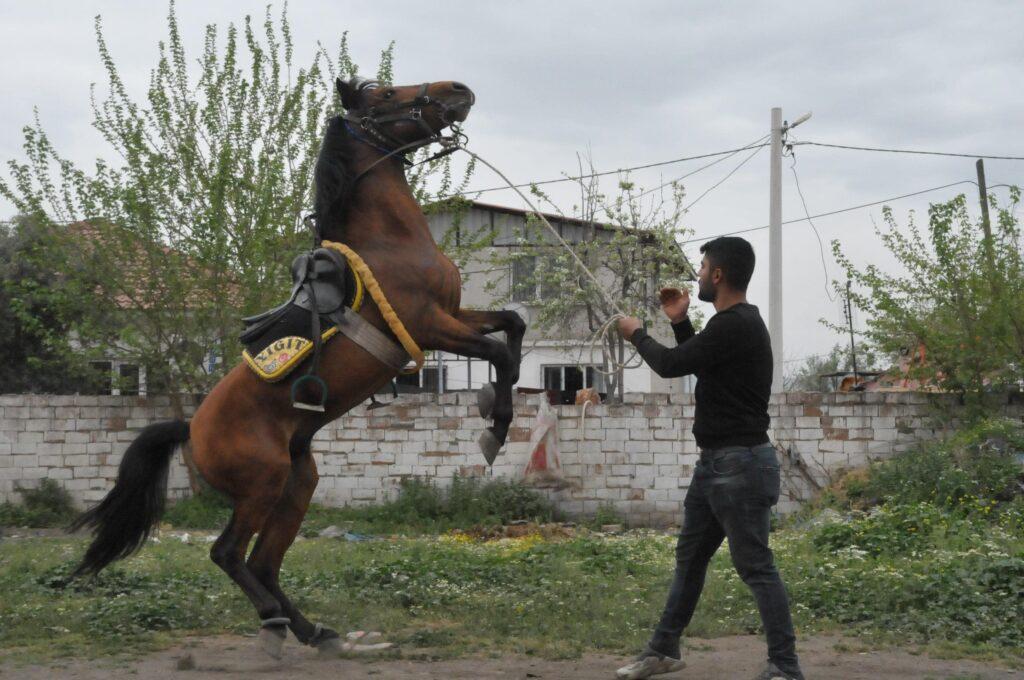 Kocagür köylülerinin geçim kaynağı rahvan atlar