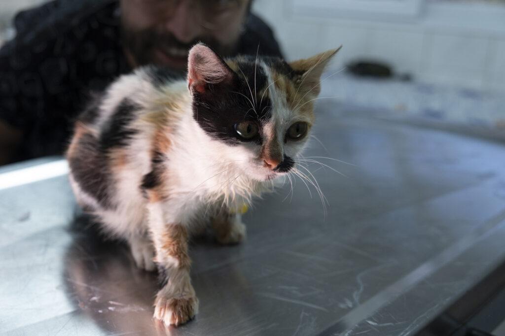 Issız adaya bırakılan kedileri belediye ekipleri kurtardı
