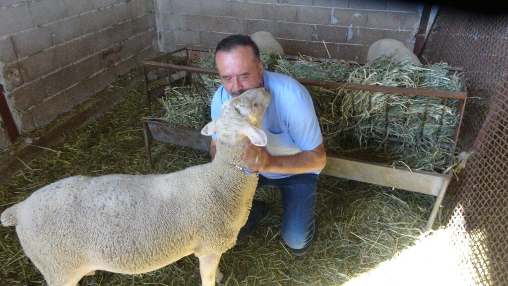 """Türkiye Tarım Hayvancılık ve Arıcılık Dayanışma Federasyonu (TAHAP) Genel Başkanı Mustafa Sarıoğlu, çiftliğinde beslediği Fransız kökenli Lacaune cinsi koyunların üretimine devam ederken, """"Köylüyü köyünde tutmanın en iyi yollarından biri küçükbaş hayvan yetiştiriciliği ve arıcılıtır"""" dedi."""